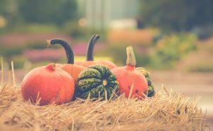 Sacramento Fall pumpkins